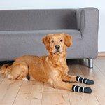 Hjælp din allergiramte hund (foto: petworld-vet.dk)